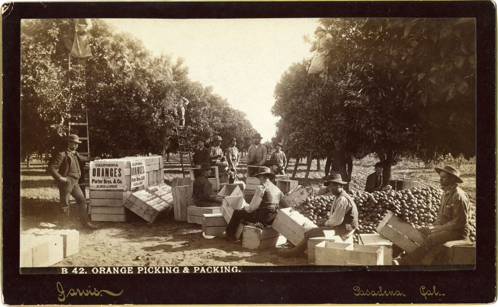 Photo of Farm Workers